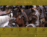 official Horses of Rohan wallpaper